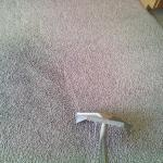 carpet cleaning difference- Dirty/Clean
